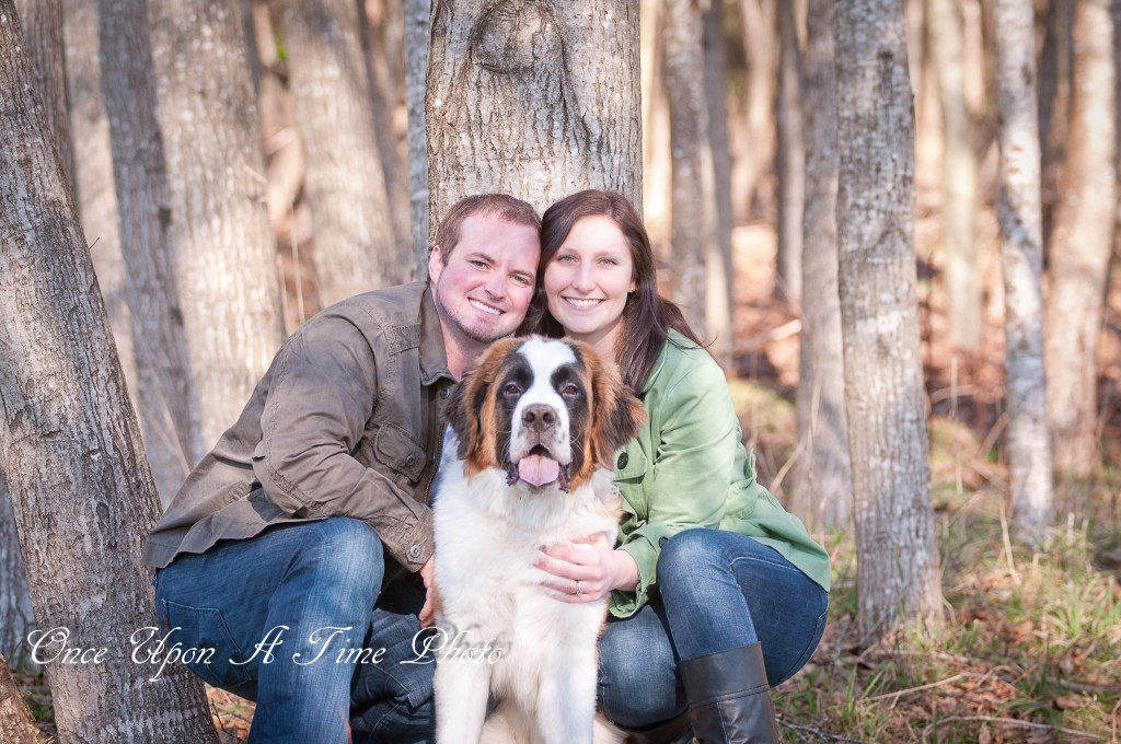 St. Bernard Dog Engagement Photos in country woods