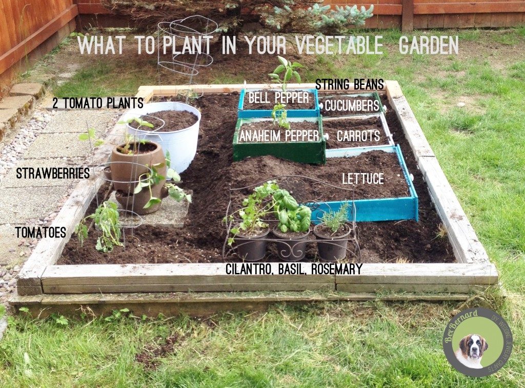 How to make a raised vegetable garden of repurposed drawers. Recycle or reuse household items to make a unique backyard. what to plant in your garden. | bexbernard.com