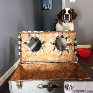 How to make an elevated dog feeder with food and water bowls in a trunk. Repurpose or recycle items for your large puppy. St. Bernard on www.bexbernard.com