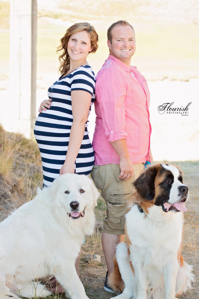 Maternity photos with two dogs, St. Bernard and Great Pyrenees. | bexbernard.com